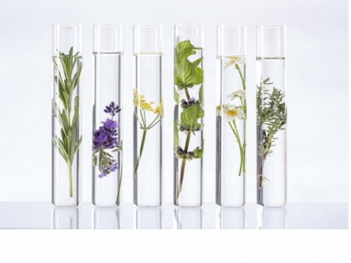 Eprouvette plantes aromatiques